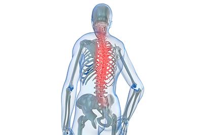 24個の椎骨全体に作用