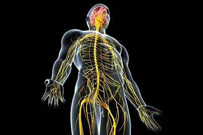 身体を健やかに保つ神経系に働きかける治療法